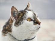 Fremde Katze mit Schneeflocke